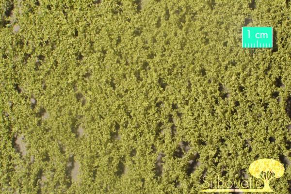 Birkenlaub / Birch foliage Frühling Größe: ca. 27x15 cm Maßstab: 1 : 160-220
