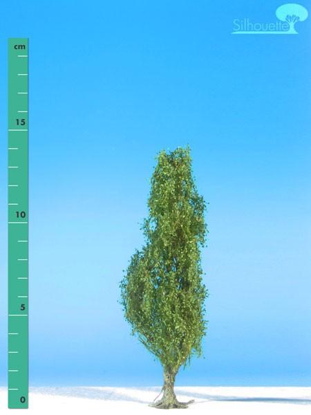 Pyramidenpappel/ Lombardy poplar Sommer Größe: 1