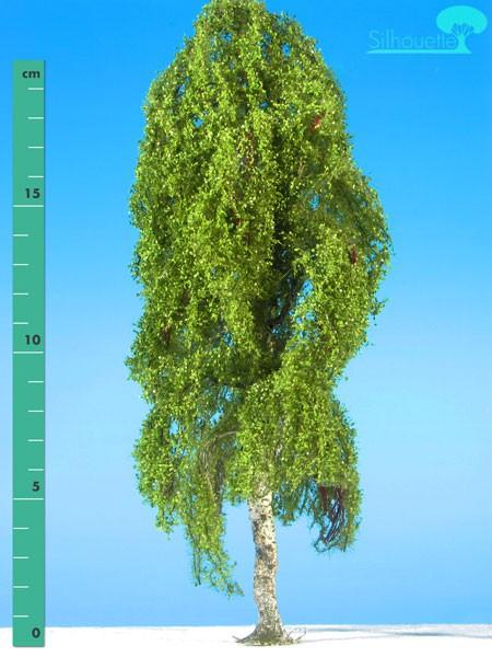 Hängebirke/ Weeping birch Frühling Größe: 3