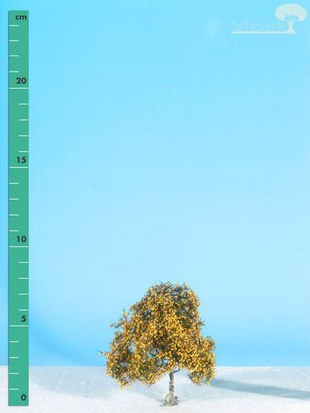 Moorbirke/ Moor birch Spätherbst Größe: 0