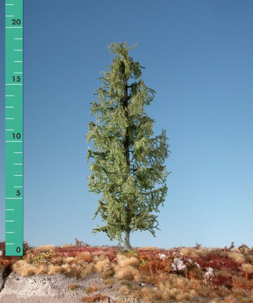 Lärche/ Larch Sommer Größe: 12-16cm