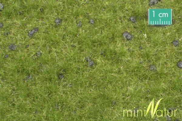 Viehw. mit Maulwurfshügeln Cattle pasture with mole hills Frühherbst Größe: ca. 50x31,5 cm Maßstab: