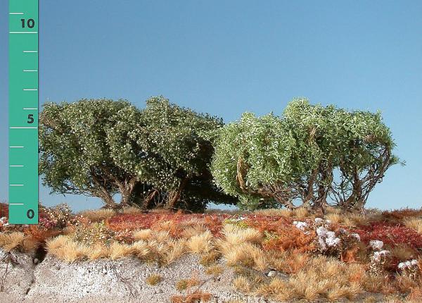 Büsche ,niedrig/ Low shrubs Sommer Größe: ca. 8 cm