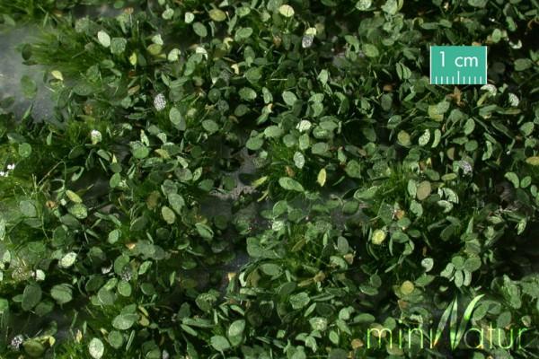 Unkrautbüschel / Weed tufts Sommer Größe: ca. 42x15 cm Maßstab: 1:45