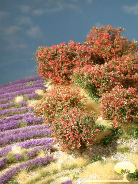 Rhododendron Größe: 0 rot 7 Stück