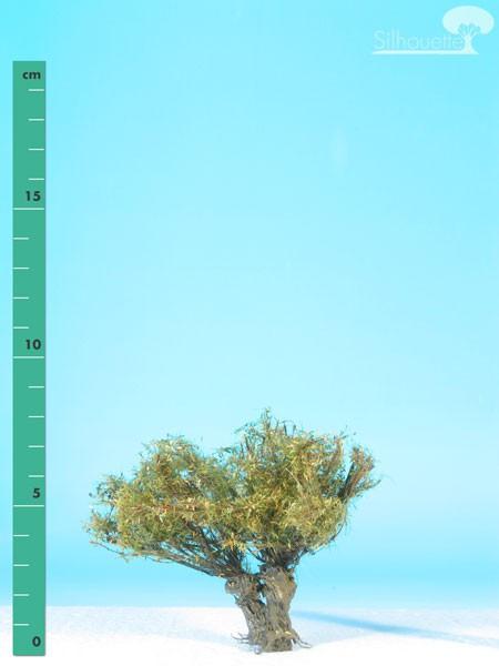 Kopfweide/ Willow stump Frühherbst Größe: 0