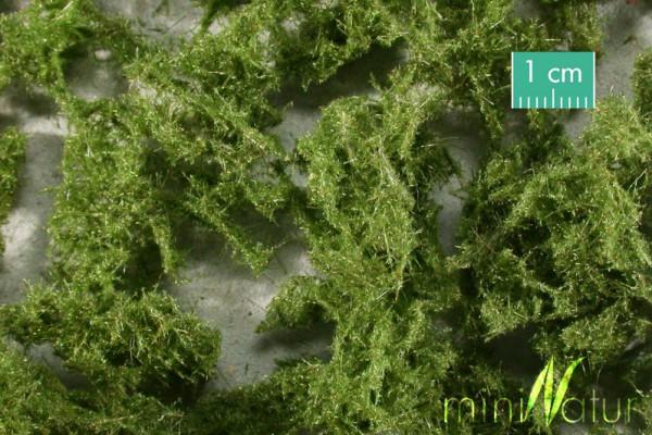 Bodendecker immergrün hell / Groundcover evergreen, bright Maßstab: H0/0