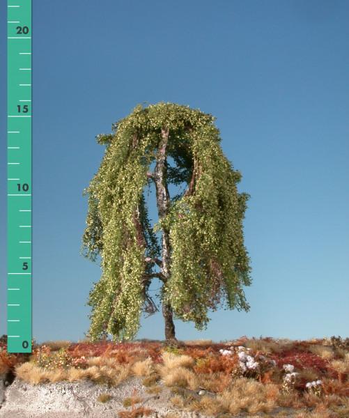 Hängebirke/ Weeping birch Sommer Größe: ca. 17cm