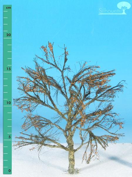 Platane/ Plane-tree Kahl Größe: 2