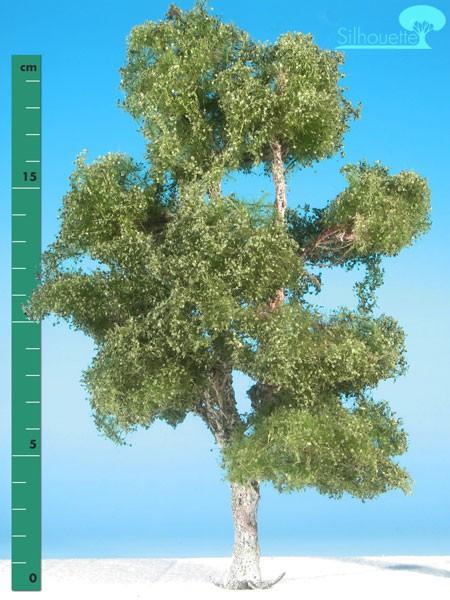 Moorbirke/ Moor birch Sommer Größe: 3