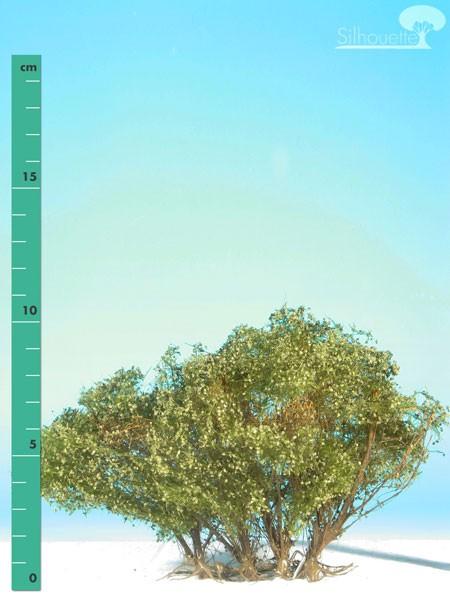 Büsche hoch Größe: 1 Sommer 1 Stück