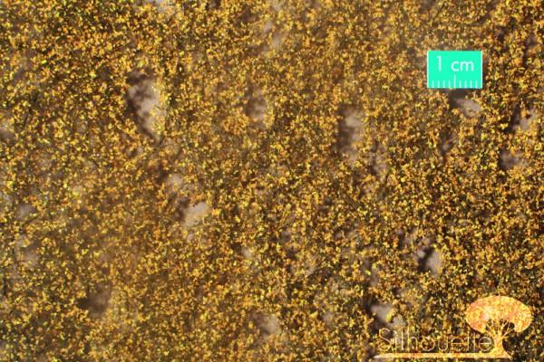 Birkenlaub Größe: ca. 27x16,5 cm Spätherbst 1 : 160-220 Stück