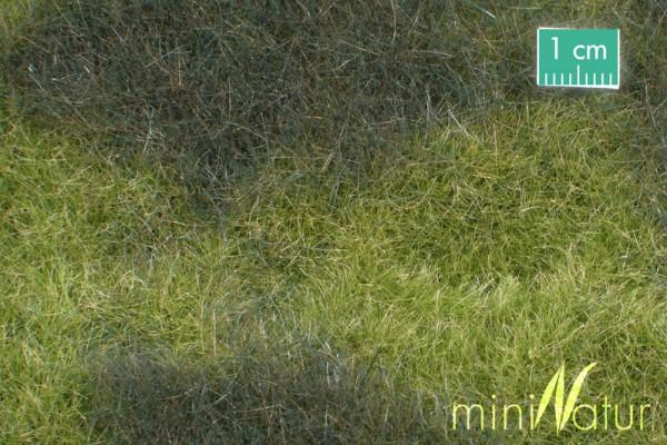 Sumpfwiese Größe: ca. 63x50 cm Frühherbst 1 : 87 Stück
