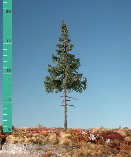 Fichte, Hochstamm/ Green spruce high trunk Sommer Größe: ca. 42 cm