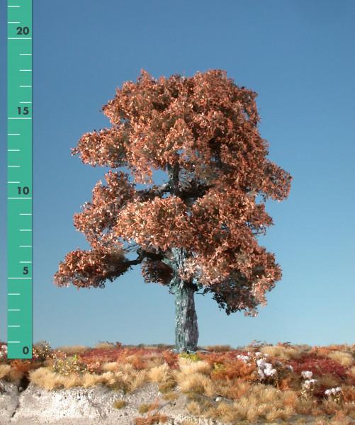 Eiche/ Oak Spätherbst Größe: ca. 30 cm
