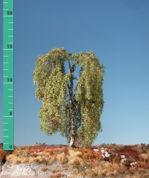 Hängebirke/ Weeping birch Frühherbst Größe: ca. 24 cm