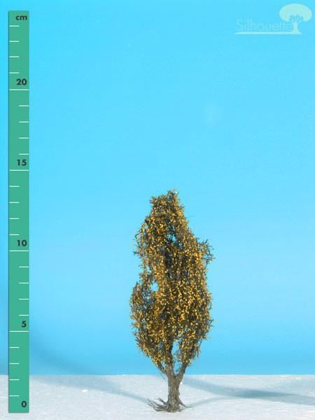 Pyramidenpappel Größe: 1 Spätherbst 2 Stück