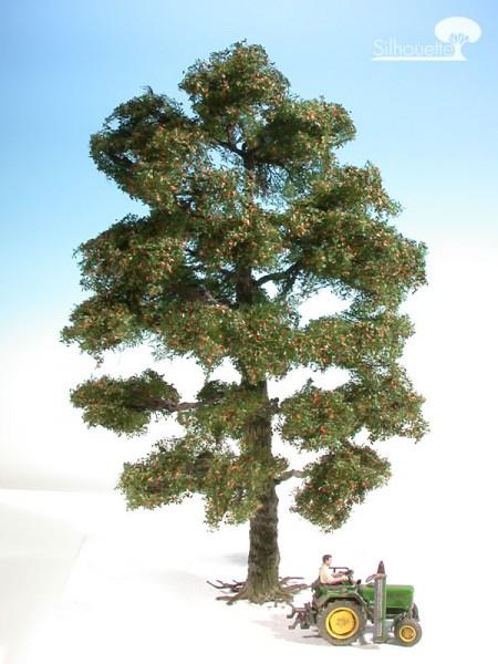 Eiche/ Oak Frühherbst Größe: ca. 47 cm
