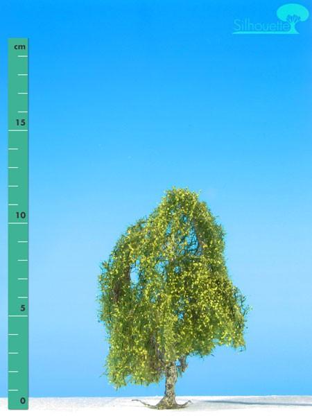 Hängebirke Größe: 1 Frühling 1 Stück