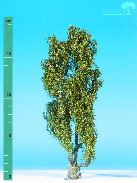 Pyramidenpappel/ Lombardy poplar Frühherbst Größe: 2