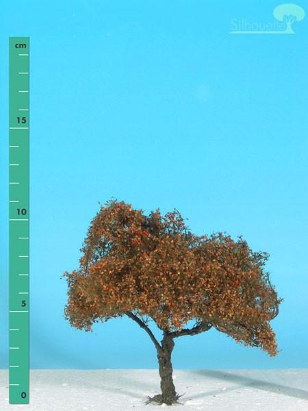 Apfelbaum/ Appletree Spätherbst Größe: 1