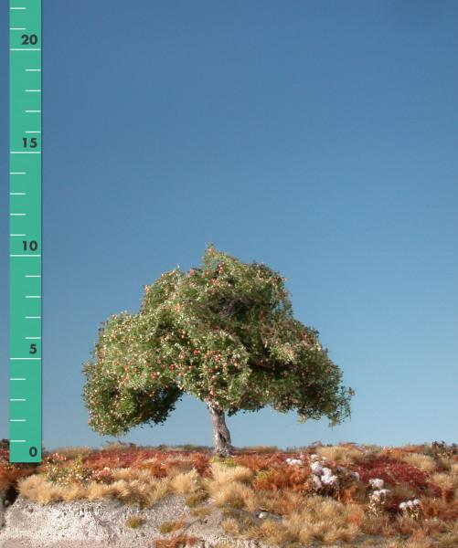 Apfelbaum/ Appletree Frühherbst Größe: 0