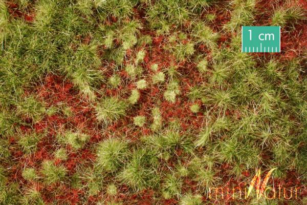 Waldboden bewachsen / Overgrown forest groundcover Frühherbst Größe: ca. 63x50 cm Maßstab: 1:45