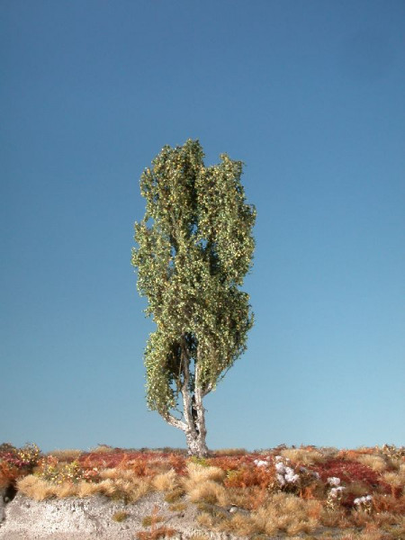 Pyramidenpappel/ Lombardy poplar Frühherbst Größe: ca. 19cm