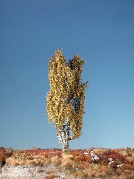 Pyramidenpappel/ Lombardy poplar Spätherbst Größe: ca. 26 cm