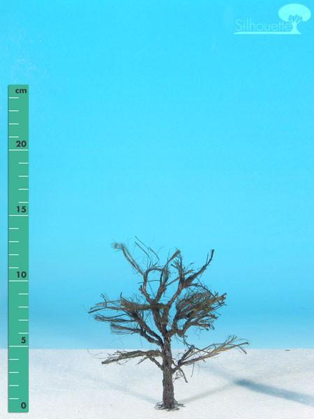 Ahorn Größe: 1 Kahl 1 Stück