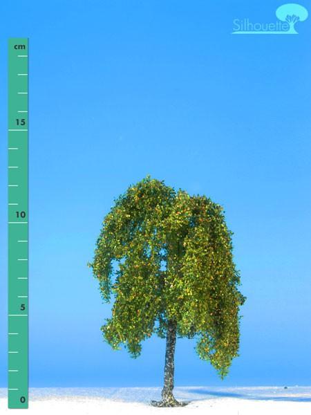 Hängebirke Größe: 1 Frühherbst 1 Stück