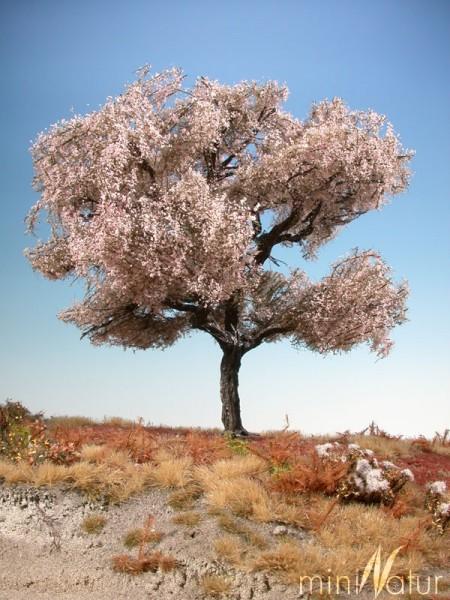 Kirschbaum Größe: 1 rosa 1 Stück