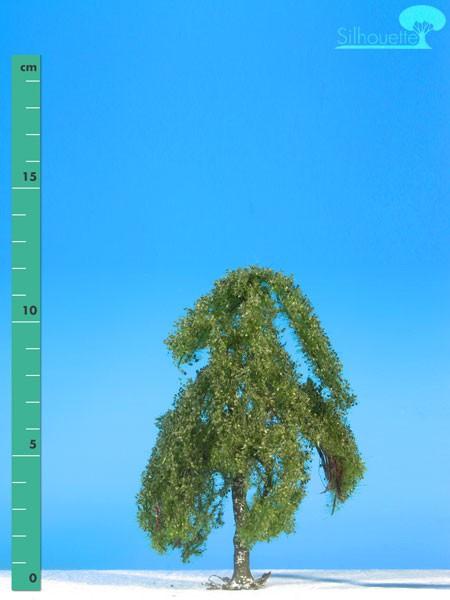 Hängebirke/ Weeping birch Sommer Größe: 1