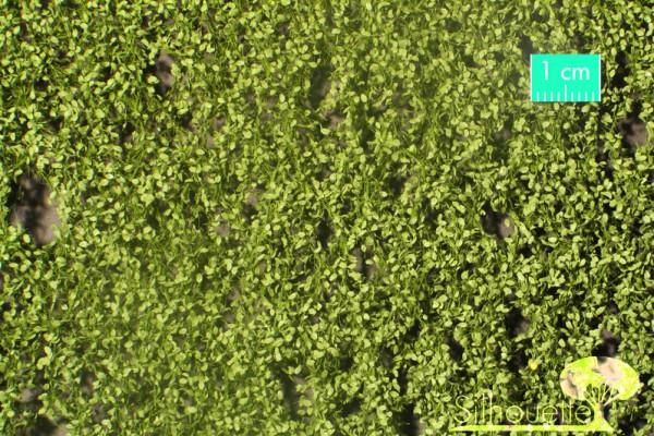 Buchenlaub Größe: ca. 27x16,5 cm Frühling 1 : 87 Stück