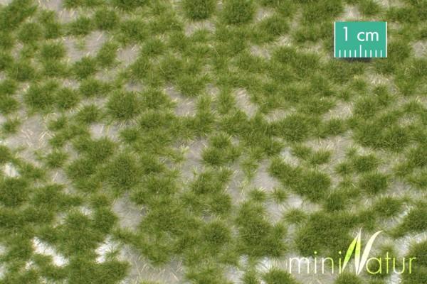 Grasbüschel kurz / Short tufts Frühherbst Größe: ca. 42x15 cm Maßstab: 1:87