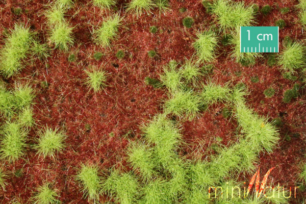 Waldboden bewachsen / Overgrown forest groundcover Frühling Größe: ca. 50x31,5 cm Maßstab: 1:45