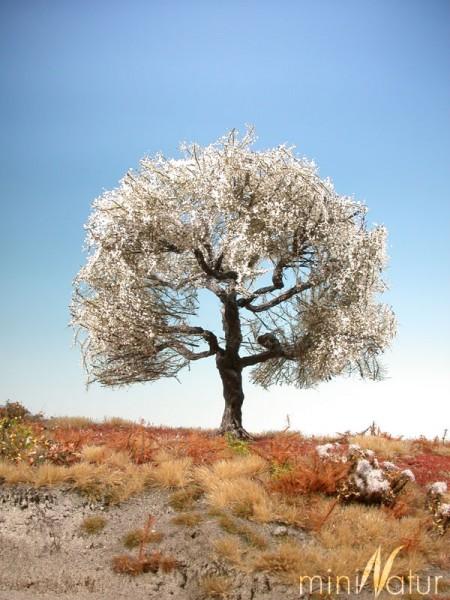 Kirschbaum Größe: 1 Frühling 1 Stück