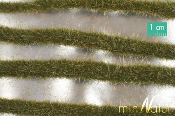 Karststreifen / Two coloured grass strips Frühherbst Größe: ca. 252 cm Maßstab: 1:45