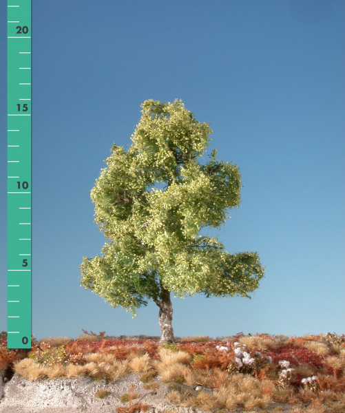 Moorbirke/ Moor birch Frühling Größe: ca. 23 cm
