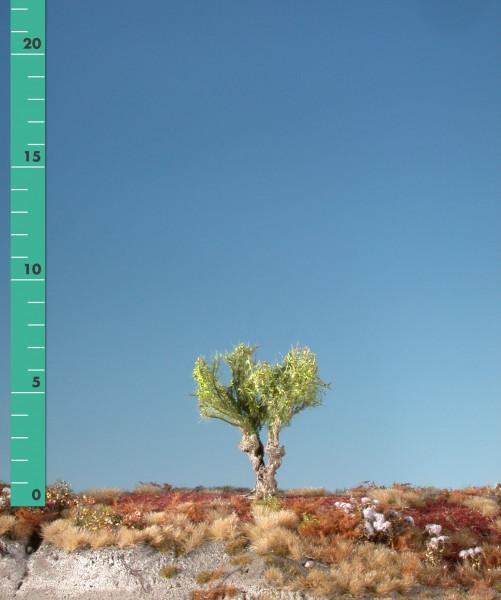 Kopfweide/ Willow stump Frühling Größe: 0