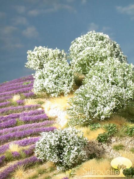Rhododendron weiß Größe: H0/0 Maßstab: H0/0