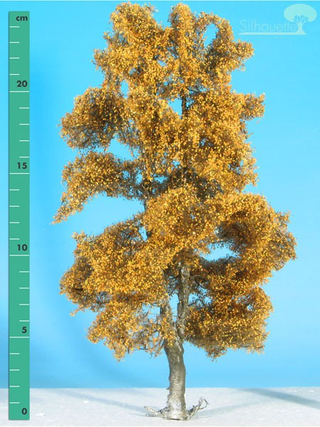 Moorbirke Größe: 3 Spätherbst 1 Stück