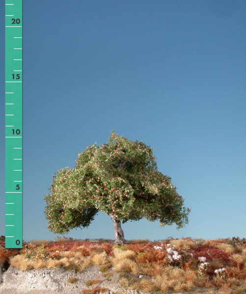 Apfelbaum/ Appletree Frühherbst Größe: 1