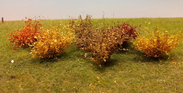 Sträucher -Sortiment/ Shrubs range Herbst Größe: ca.4cm