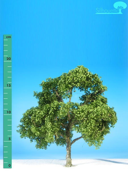 Platane/ Plane-tree Sommer Größe: 2