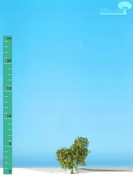 Platane/ Plane-tree Frühherbst Größe: 0