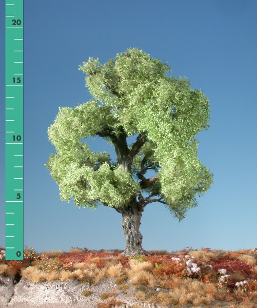 Eiche / Oak Frühling Größe: 0