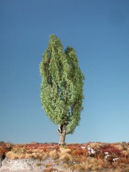 Pyramidenpappel/ Lombardy poplar Sommer Größe: ca. 26 cm