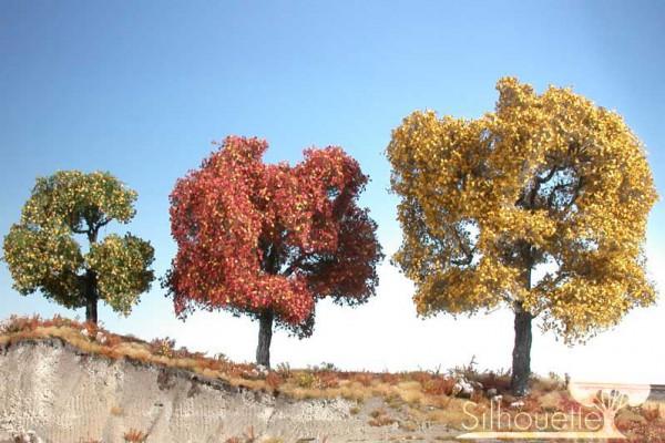 Ahorn (rot)/ Maple red Spätherbst Größe: 2