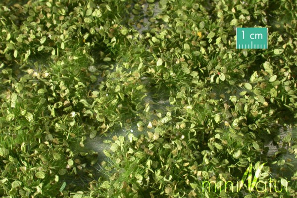 Unkrautbüschel / Weed tufts Frühling Größe: ca. 42x15 cm Maßstab: 1:45